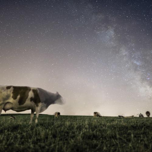 Scarabea - Morgens um Neun auf der Milchstraße