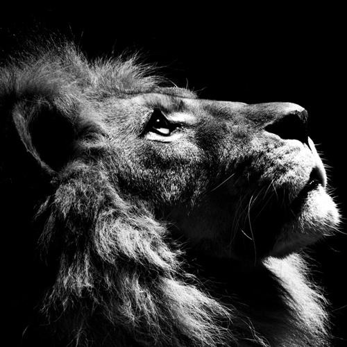 Vortek - Lion Heart [FORTHCOMING HEAVY ARTILLERY RECORDINGS]