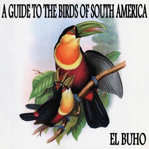 El Buho - Pavonine Quetzal (Pharomachrus Pavoninus)