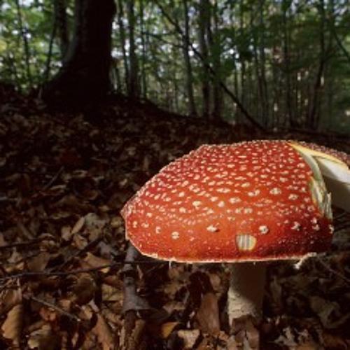 Mushroom Weather