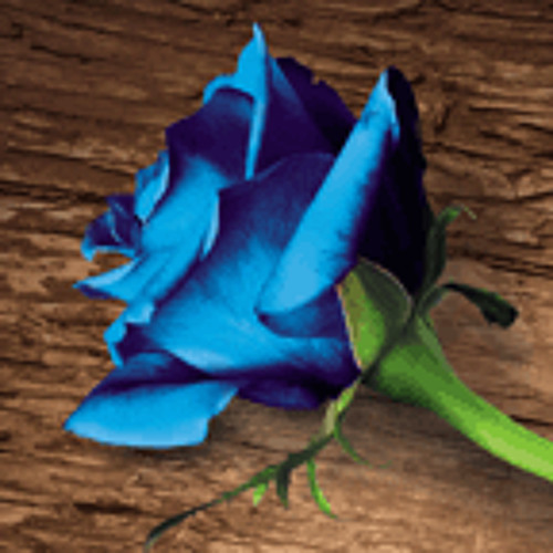 Music from The Blue Flower