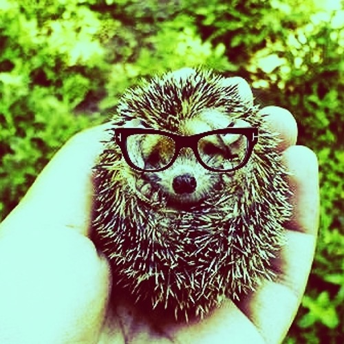 Hipster Hedgehogs