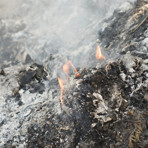 c4n - burning forest