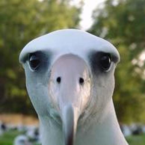Sons of Arqa - Albatross