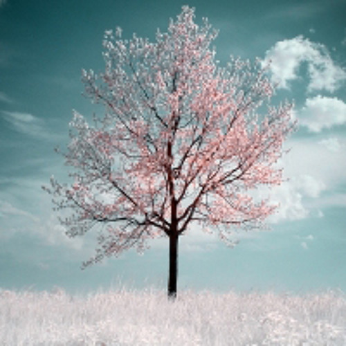 Abdomen Burst & Bessonov - Sakkura Flowers in the Sky (Esthetics Mashup)