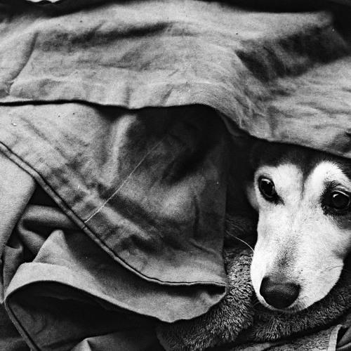 Burial-Dog Shelter (SoupOrFry Edit)