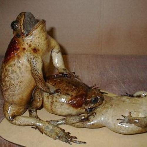 Frogwomp
