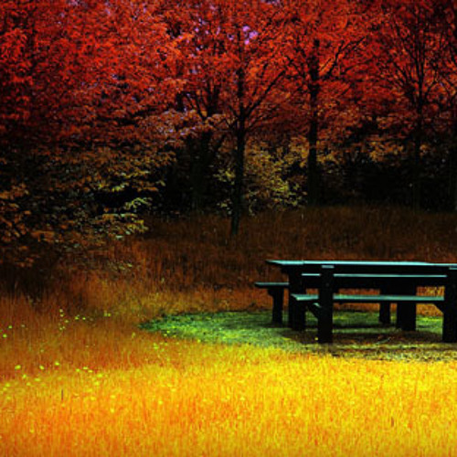 Rissa Garcia-Deep Wit Autumn Mix