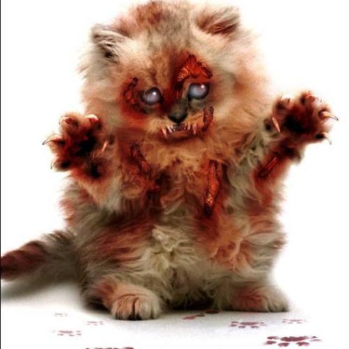 Zombie kitten (WIP)