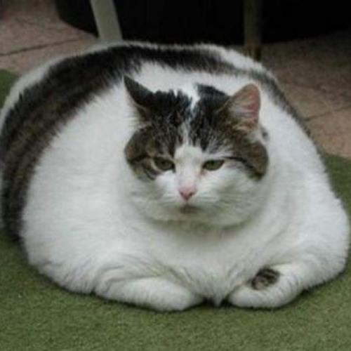 Fatty fat