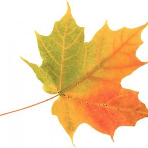 Toyza - Autumn Mood