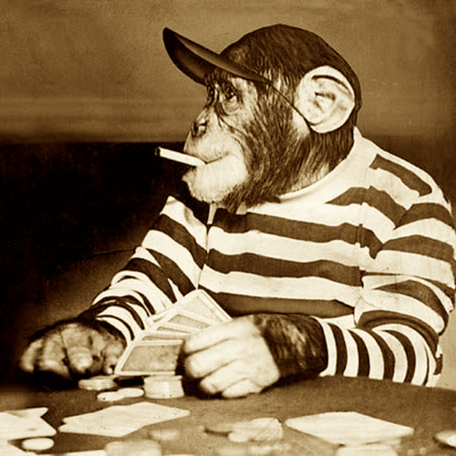 *Monkey Hussle*