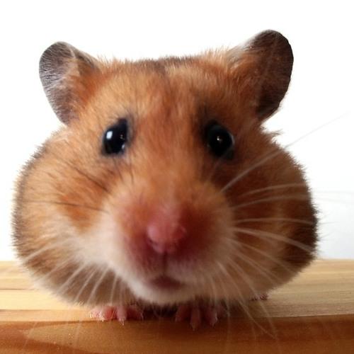 Flat hamster(Original mix)