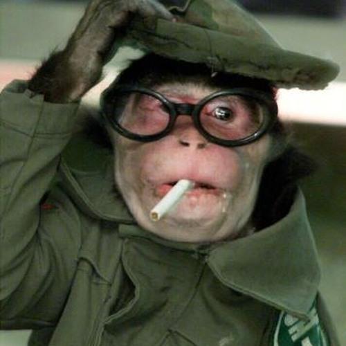 Capital Monkey - Synesthesia