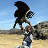 """The Condor - """"Faithfully"""""""