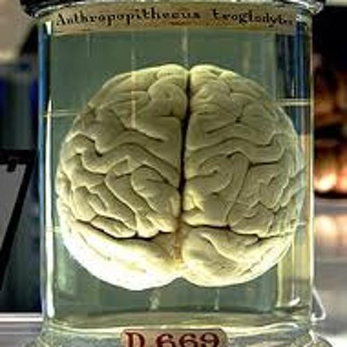 Ok Brain