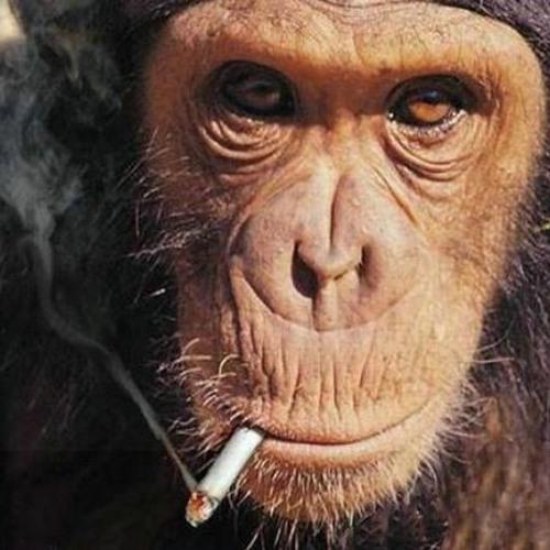 Slumbitch & Nick James - Monkeys (V2.0)