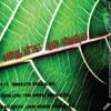 D.F.K-Shibboleth (Original Mix) Preview  GTR 002