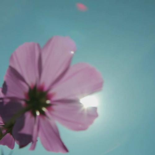 Love Track (DerRalle Beat)+Interlude