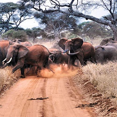 ElephantightnesS  *D/L 4 Free*