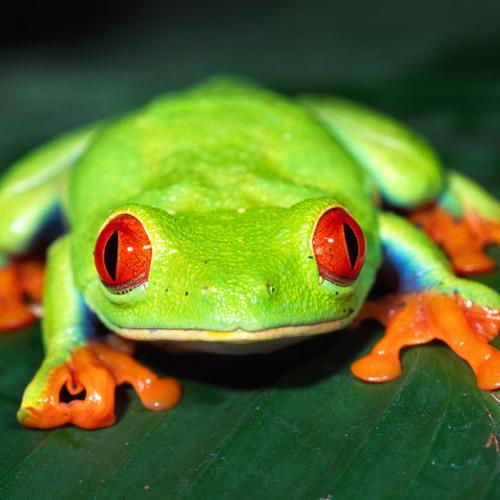 Alien Frogs
