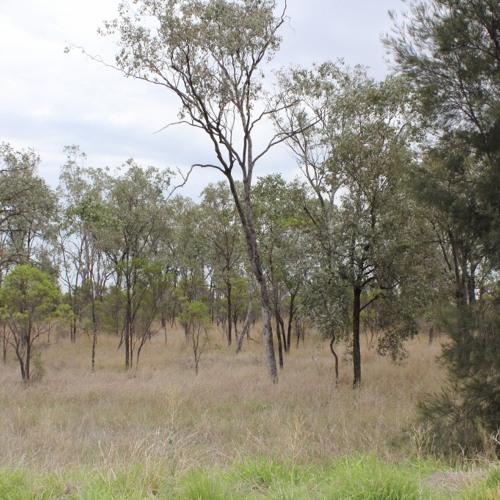 Distant quad bike, Australian Outback