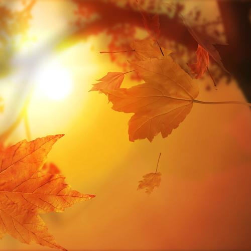 Fobee - Autumn Leaves
