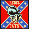 rebel cats   gato rebelde