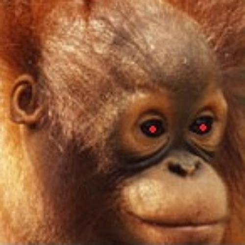 Circle - Orangutang. Preview