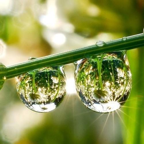 Profetia - Morning Dew