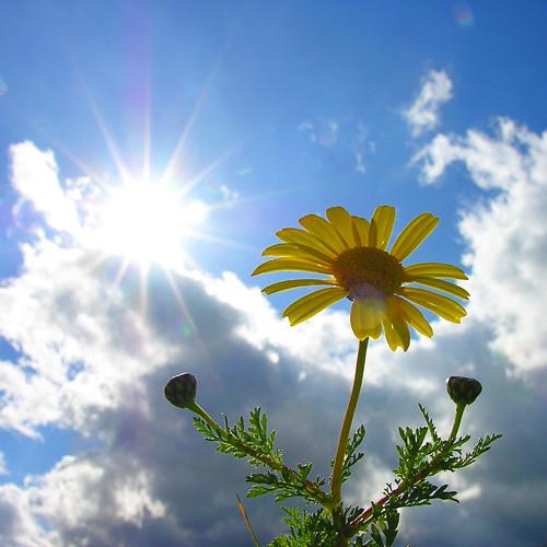 North Sunset-Morning Flower(Original Mix)