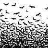 Pirx - Bat Fly