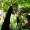 Rainforest Dub