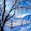Winter Wonderland of Snow Medley