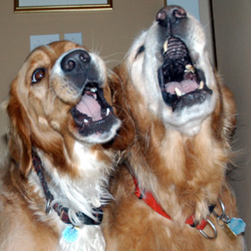 Singing Dogs And Friends