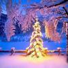No Christmas For Me (Zee Avi Cover)
