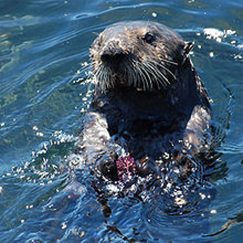 The Otter Song