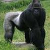 Kick Dow by (P.T.G) Playa Type Gorilla