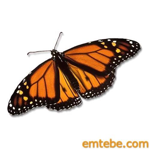 Lamb - Butterfly Effect (Emtebe Remix)