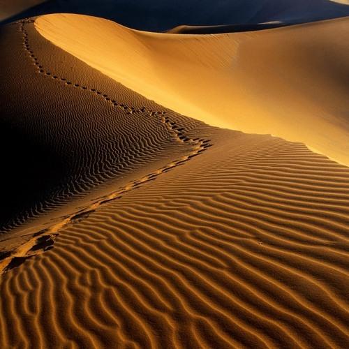 The Desert (Demo 122911)