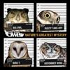 The Four Owls Champions ft Q-Unique