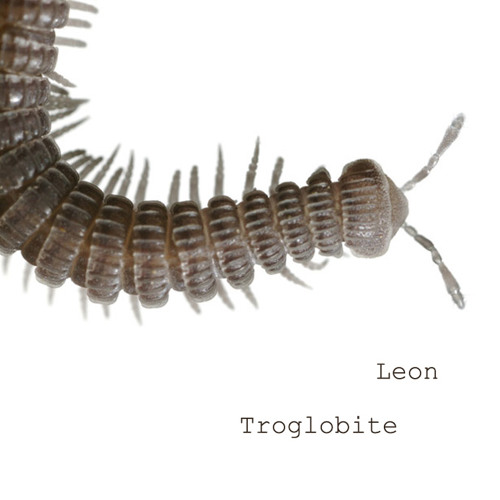 Troglobite