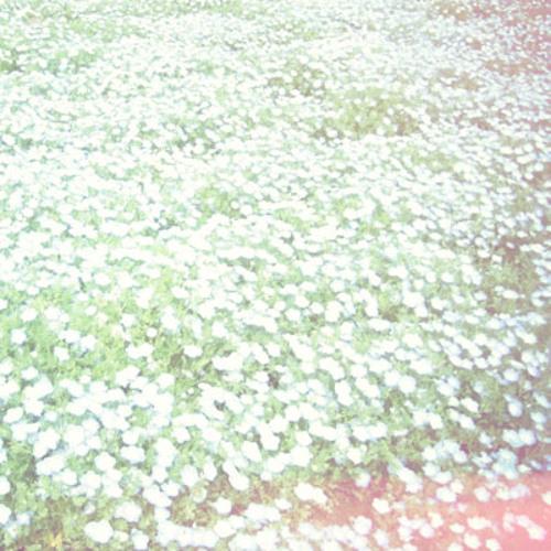Wallflower - Dreamy Days