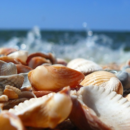 Johan Vilborg - Seashells