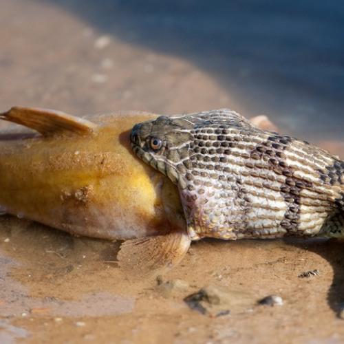 I dont eat you  - dub reptilia