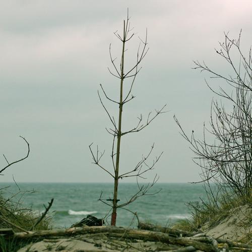 wind on a dead pine tree, Nida