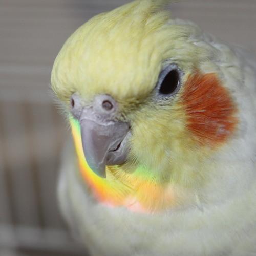 Bye Bye Birdy - pt 2