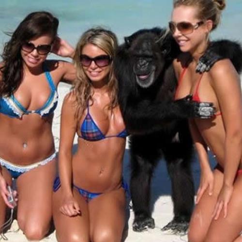 Antoo - Monkey Business
