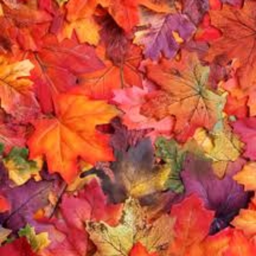 Autumn Leaves (Eva Cassidy Cover)