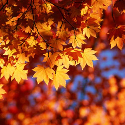 Autumn Leaves [Sample]